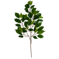 22'' Ficus Foliage