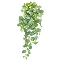 Cascading Fittonia Foliage, 33''