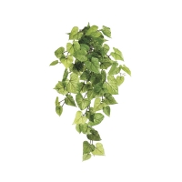 28'' Patato leaf hanging bush