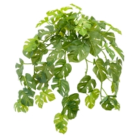 Cascading Philodendron Foliage, 22''