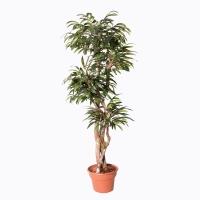 Arbre artificiel, Ficus Ali 6'