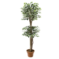 7' Artificial tree, Green & white ficus