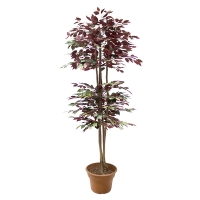 6' Artificial tree, green & red ficus