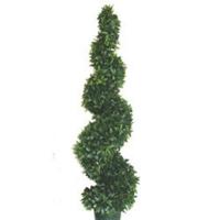 Ficus spiral 5' Garantie 2 ans