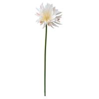 White Night Blooming Cactus Flower, 32''