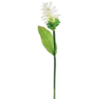 White Ginger Flower Stem, 35''