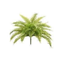 23'' Boston fern bush