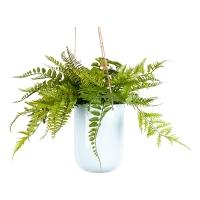 Ferns in Suspended Planter, 15x19''