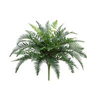 24'' River fern plant