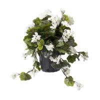 Géranium blanc en pot de culture noir 17 x 16''