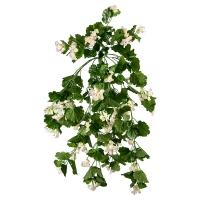 Géraniums retombants blancs