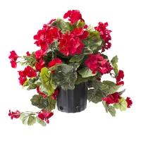Géranium rouge en pot de culture noir 17 x 16''