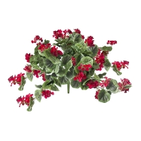 Red geranium bush, 2 years warranty against discoloration