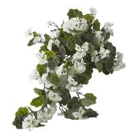 Exterior white geranium hanging bush
