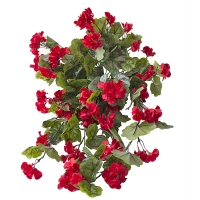 Exterior red geranium hanging bush