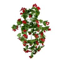 Géraniums retombants rouges