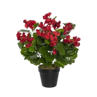 Géraniums rouges en pot, 18''