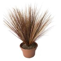 Grass brun en pot 12x12x28''