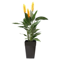 5,5' Heliconia with yellow flowers