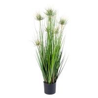 Onion Grass, 32''