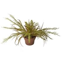 Herbes verte forêt en pot 15x15x14''