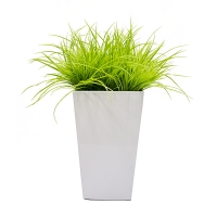 Lime green grass in white planter int./ext.
