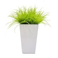 Herbes vertes limes dans pot carré blanc, int./ext.