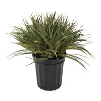 Herbes vertes en pot de culture noir 13 x 12 x 12''