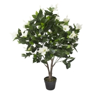 43'' White outdoor hibiscus tree