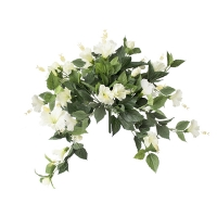 White hibiscus bush, 2 years warranty against discoloration