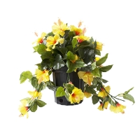Yellow hibiscus in black plastic planter 17 x 16''