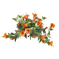 Orange hibiscus bush, 2 years warranty against discoloration
