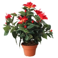 Plante artificielle, hibiscus à fleurs rouges 14''