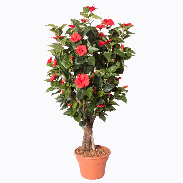 Plante artificielle hibiscus fleurs rouges 4 39 d cors for Plantes soldes