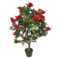 Plant d'hibiscus rouge extérieur 43''