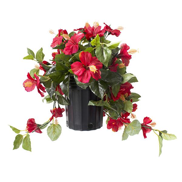 Hibiscus rouge en pot de culture noir 17 x 16 39 39 d cors - Hibiscus exterieur en pot ...