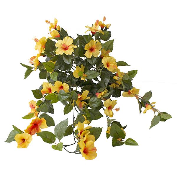 Hibiscus suspendu ext rieur jaune d cors v ronneau - Hibiscus exterieur en pot ...
