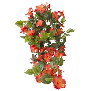 Hibiscus suspendu ext rieur orange d cors v ronneau - Hibiscus exterieur en pot ...
