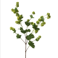 Green natural Hops stem 39 inch