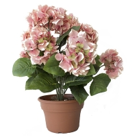 Hydrangé rose et vert en pot 14x14x22''