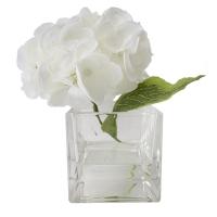 Hydrangée blanche dans vase de verre 5,5''