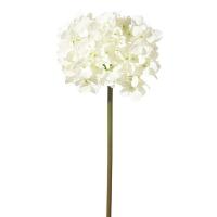 Fleur d'hydrangée crème