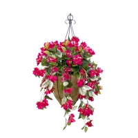 Red bougainvillea hanging basket