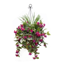 Fushia bleeding heart hanging basket