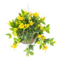 Yellow outdoor hibiscus hanging basket, 2 year war