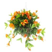 Orange outdoor hibiscus hanging basket, 2 year war