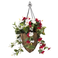 White and red hibiscus geranium hanging basket