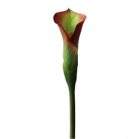 Artificial flower green and burgundy Calla Lily 31,5