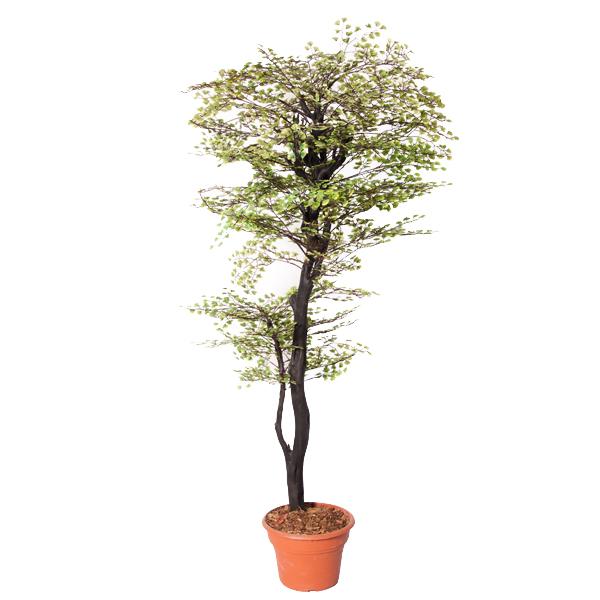 arbre artificiel maidenhair 5 39 d cors v ronneau. Black Bedroom Furniture Sets. Home Design Ideas