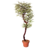6' Artificial Maidenhair tree